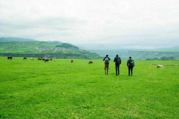 I giovani camminano in un campo verde dove le mucche pascolano durante il giorno