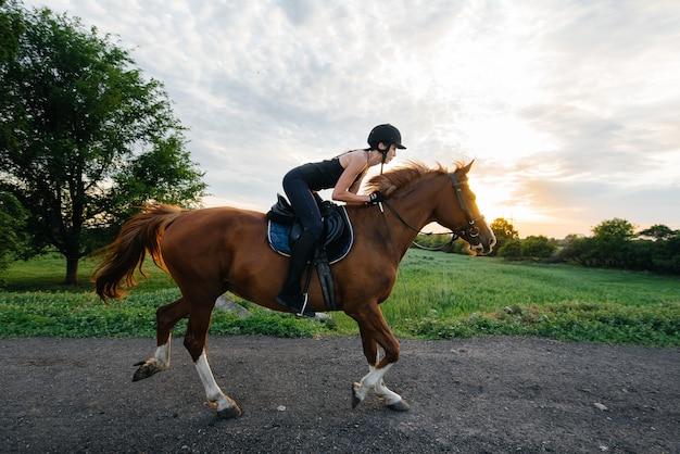 Un fantino giovane bella ragazza che monta uno stallone purosangue è impegnato in passeggiate a cavallo al tramonto. sport equestri., passeggiate a cavallo.