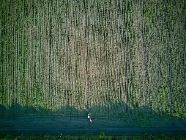 Giovani piante di girasole in irrorazione di campo, agricoltura in primavera, trattore con attrezzatura