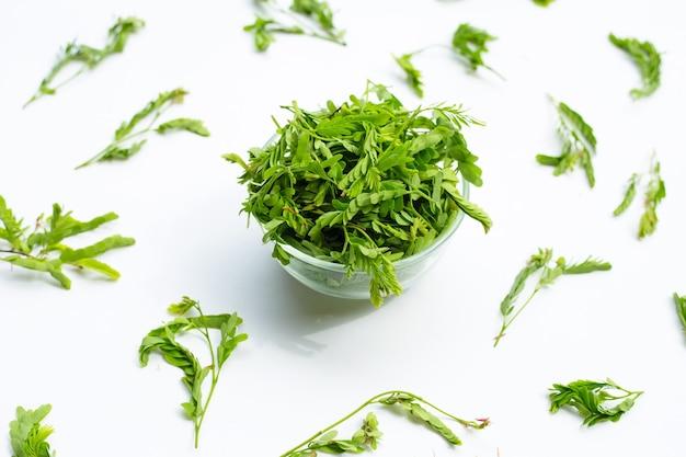 Giovani foglie di tamarindo per cucinare sulla superficie bianca
