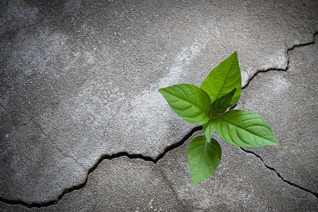 Pianta giovane albero che cresce attraverso il pavimento di cemento incrinato