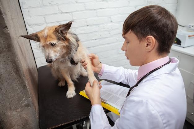 Giovane veterinario esaminando arti e zampe di un simpatico e soffice cane da riparo