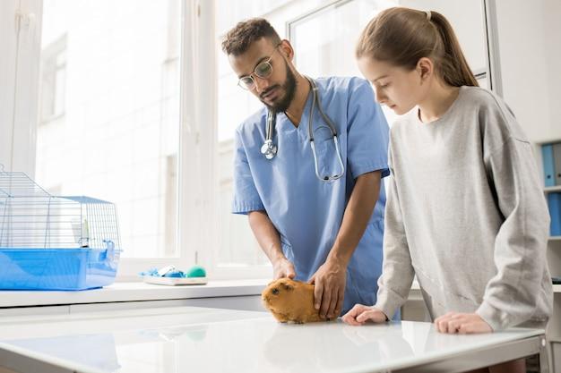 Tavolo veterinario giovane che fa una pausa, che tiene la cavia marrone dello zenzero e la bambina consultantesi