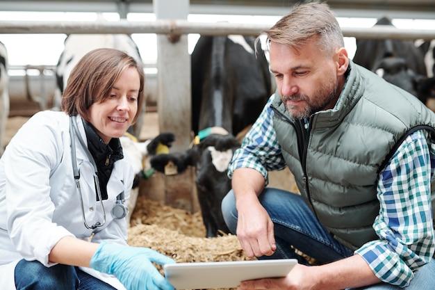 Giovane veterinario e operaio del caseificio contemporaneo guardando attraverso i dati online sul display touchpad durante il lavoro