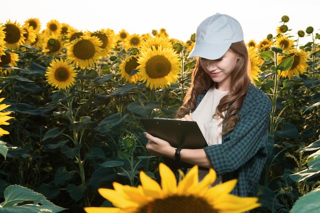 Agronomo della giovane donna che ispeziona i girasoli nel campo