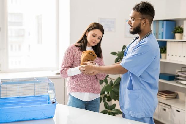 La giovane donna ha portato la cavia marrone in cliniche veterinarie e lo ha mostrato a un veterinario professionista