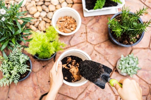Giardinieri della giovane donna trapiantano a mano una pianta in un nuovo vaso a casa