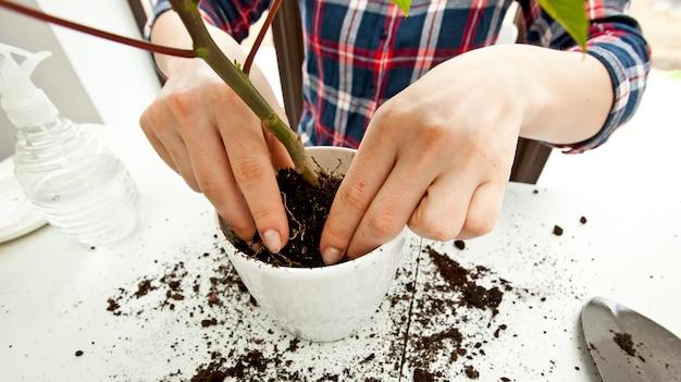 La giovane donna sta trapiantando una pianta a in un nuovo vaso a casa
