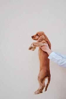 Giovane donna alla strada che tiene il suo simpatico cane cocker. stile di vita all'aperto con animali domestici
