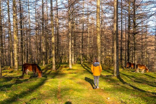 Una giovane donna che accarezza cavalli selvaggi nella faggeta di oianleku, nella città di oiartzun, gipuzkoa. paesi baschi