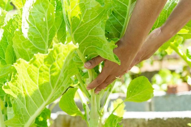 Giovane donna che sostiene una pianta di cavolo cappuccio nell'orto.