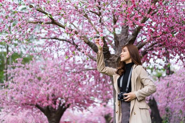 Viaggiatore della giovane donna che osserva i fiori di ciliegia o fiore di sakura che sboccia e che tiene la macchina fotografica per scattare una foto nel parco