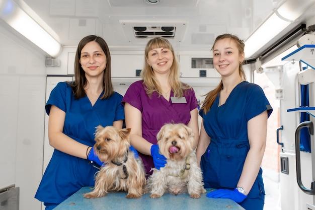 Medici professionisti dell'animale domestico delle giovani donne che posano con gli yorkshire terrier dentro l'ambulanza dell'animale domestico