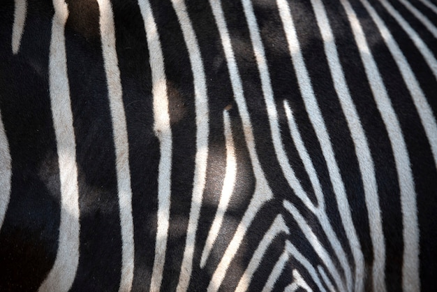 Texture della pelle di zebra