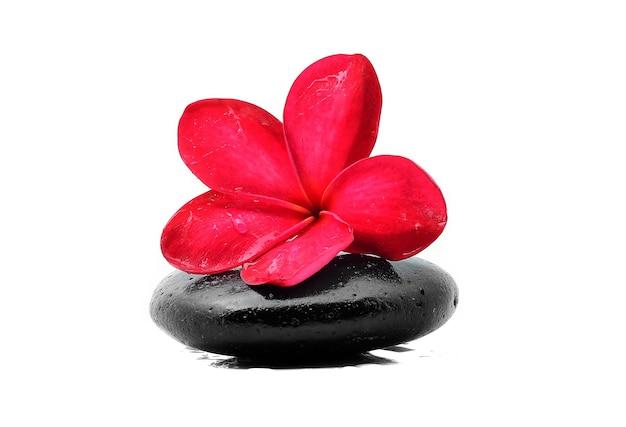 Pietre zen con fiore di frangipane