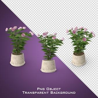 Fiore in vaso 3d isolato