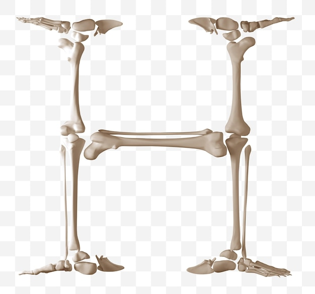 Rendering 3d della lettera h dell'alfabeto fatta di ossa umane isolate file psd