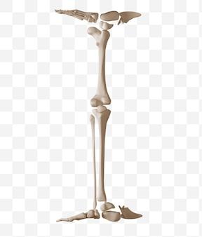 Rendering 3d della lettera dell'alfabeto che ho fatto di file psd isolato ossa umane
