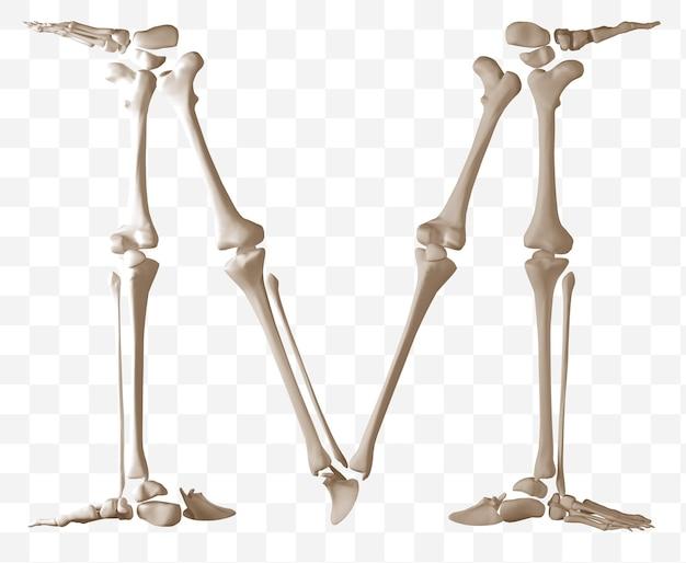 Rendering 3d della lettera m dell'alfabeto fatta di ossa umane isolate file psd