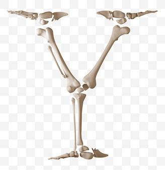 Rendering 3d della lettera dell'alfabeto a fatta di ossa umane isolate file psd
