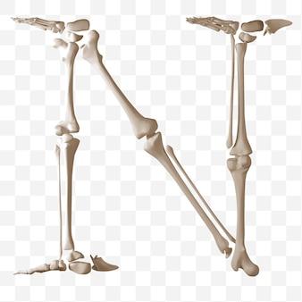 Rendering 3d della lettera n dell'alfabeto fatta di ossa umane isolate file psd