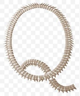 Rendering 3d della lettera dell'alfabeto q fatta di ossa umane isolate file psd