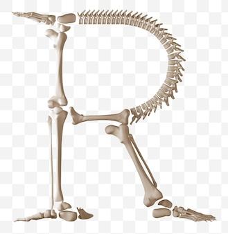 Rendering 3d della lettera r dell'alfabeto fatta di ossa umane isolate file psd