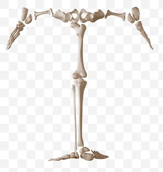 Rendering 3d della lettera t dell'alfabeto fatta di ossa umane isolate file psd