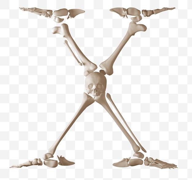 Rendering 3d della lettera dell'alfabeto xmade di ossa umane isolate file psd