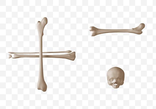 Rendering 3d di simboli alfabetici fatti di file psd isolati ossa umane