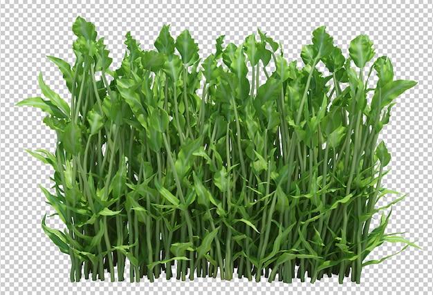 3d rendono le piante del cespuglio isolate