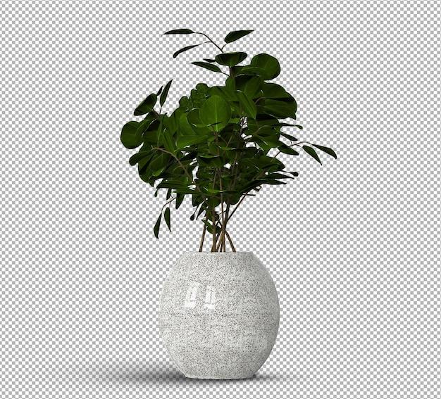 Rendering 3d di piante realistiche isolate in vaso