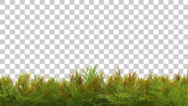 Rendering 3d del primo piano della pianta di acrostichum aureum isolato