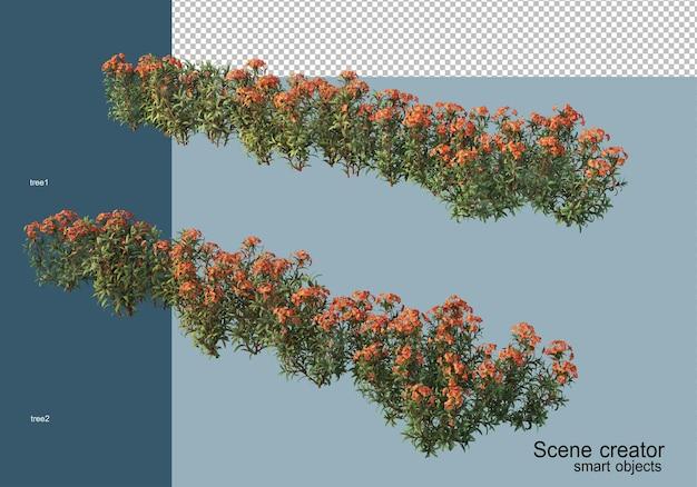 Rendering 3d di bellissimi arbusti in vari angoli isolati
