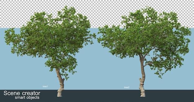 Rendering 3d di bellissimi alberi in vari angoli isolati