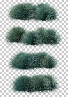 Rappresentazione 3d dell'erba blu di festuca
