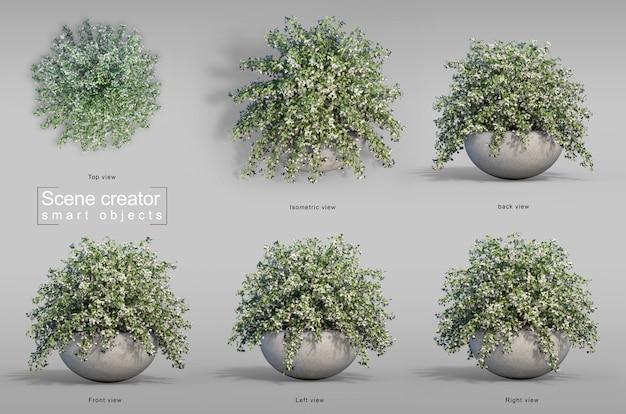 Rappresentazione 3d della buganvillea nel creatore di scena del vaso