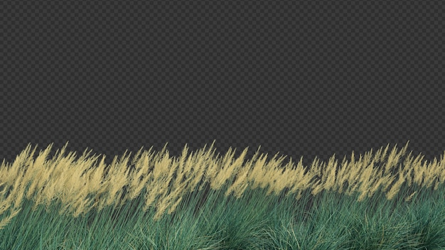 3d rendering di boulder blue fescue grass colpo in primo piano
