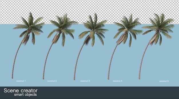 Rendering 3d di palme da cocco e palme