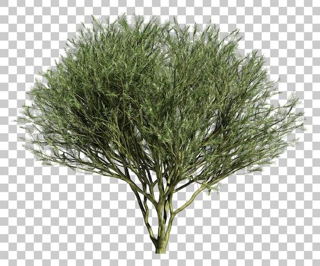 Rappresentazione 3d dell'albero di palo verde del museo del deserto