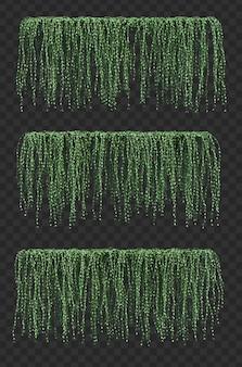 Rappresentazione 3d delle piante d'attaccatura di dischidia