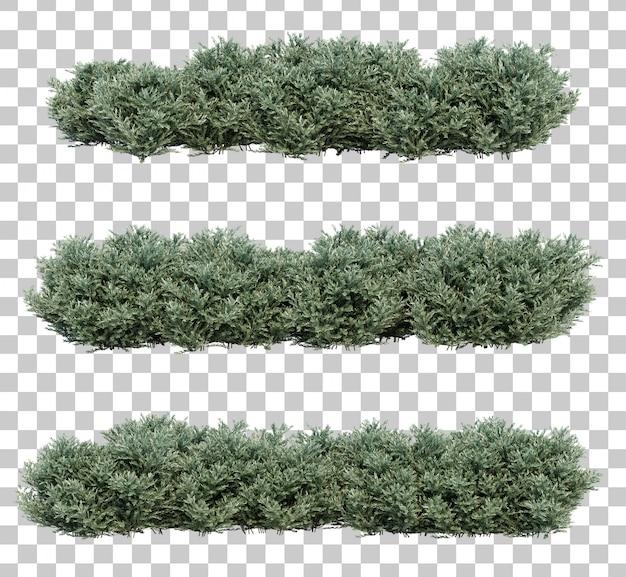 Rappresentazione 3d dei cespugli di ulivi nani