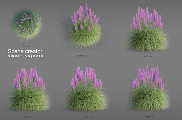 Rappresentazione 3d dell'erba nana di pampa
