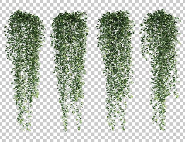 Rappresentazione 3d di epipremnum aureum