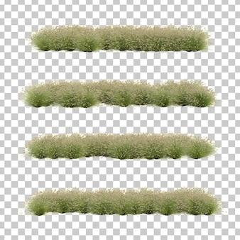 Rappresentazione 3d dell'erba del feathertop