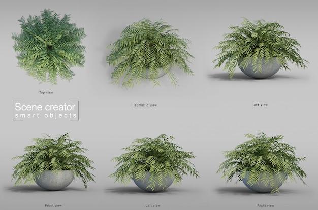 Rappresentazione 3d dell'albero di felce in pianta da vaso