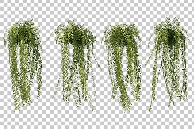 Rappresentazione 3d dell'insieme dell'albero di felce