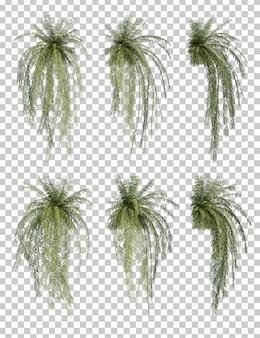 Rappresentazione 3d dell'albero di felce