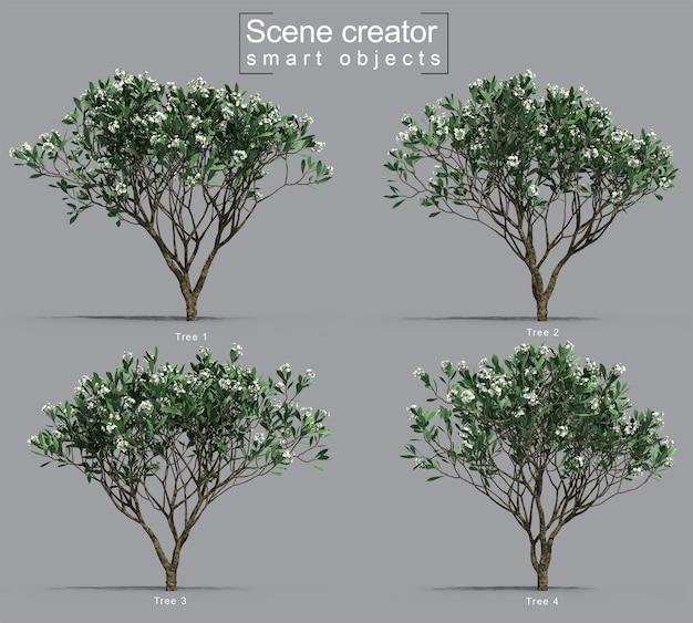 Rendering 3d del creatore di scene dell'albero di frangipani