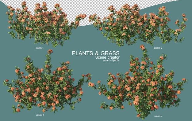Rendering 3d di disposizioni di erba e arbusti